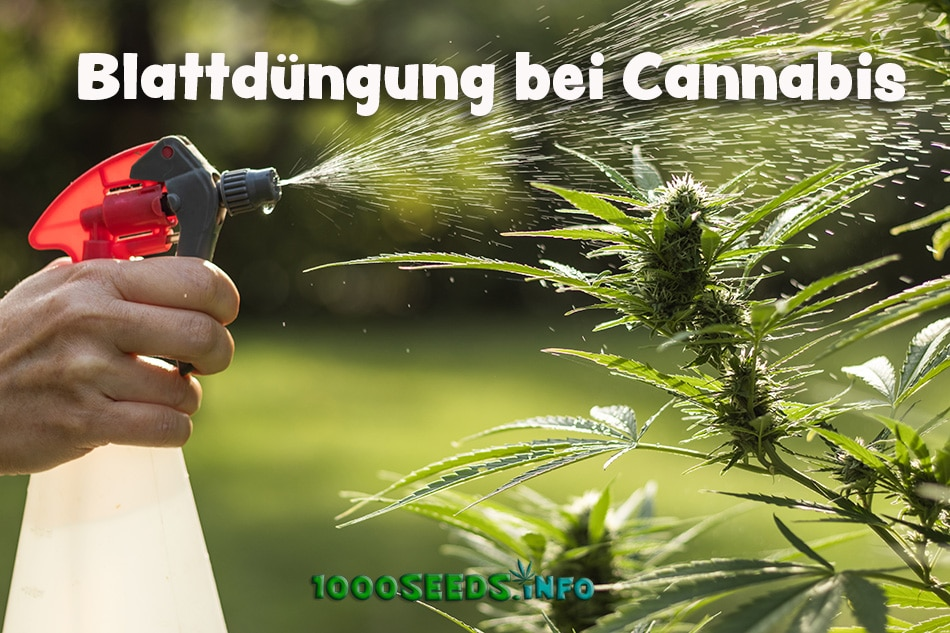 Cannabis-Spray
