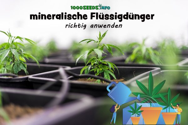 Cannabispflanzen-fertilizer