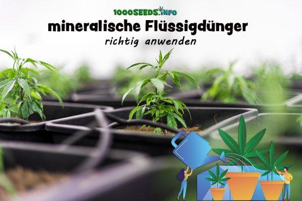 Cannabispflanzen-fertilizer