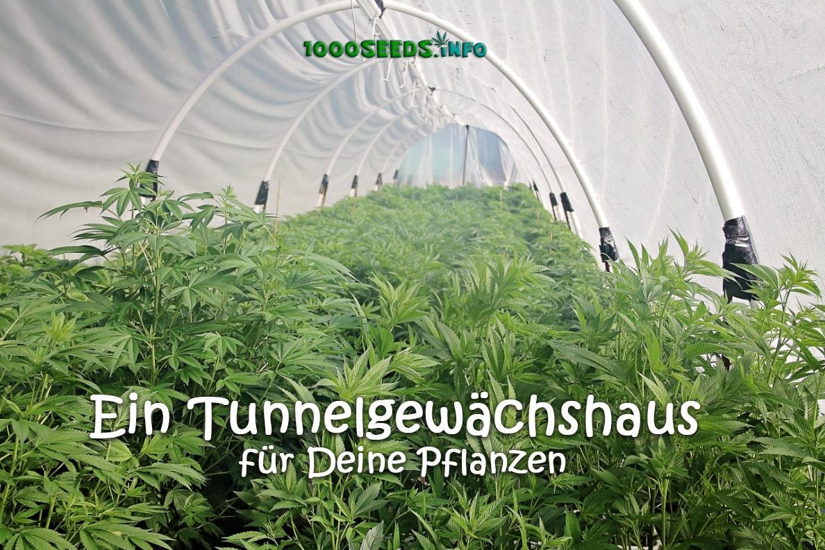 Greenhouse-Hoop-House-Cannabis