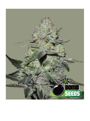 Gorilla-Bomb-Bomb-Seeds
