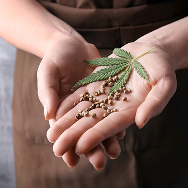 Marijuanasamen kaufen