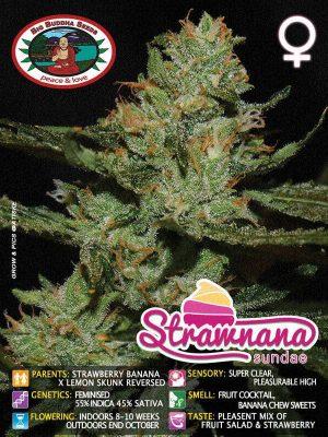 Strawnana-Big-Buddha-Seeds