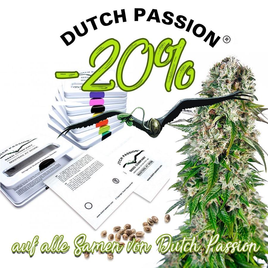 Den kompletten Oktober gibt es 20% auf alle Samen von Dutch Passion