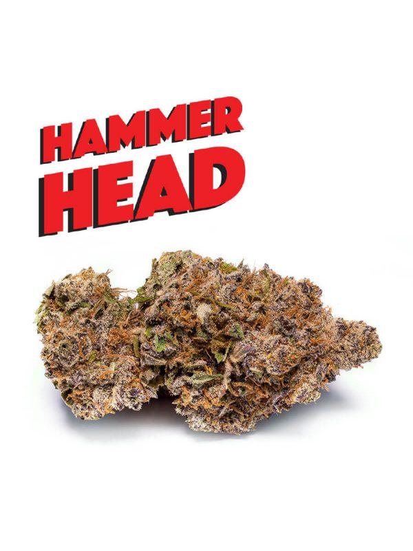 Hammer Head von Phat Panda