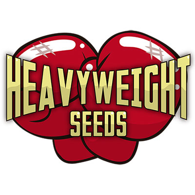 Heavy-weight-Cannabis-seeds