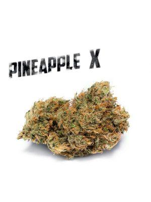 Pineapple X