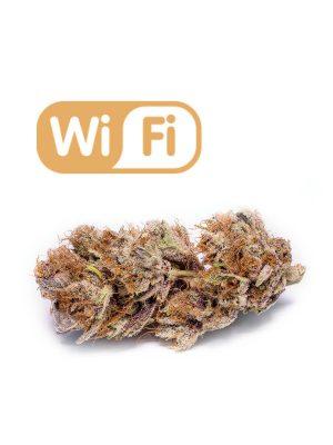 WiFi von Phat Panda
